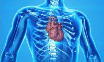 Curiosidades sobre el corazón